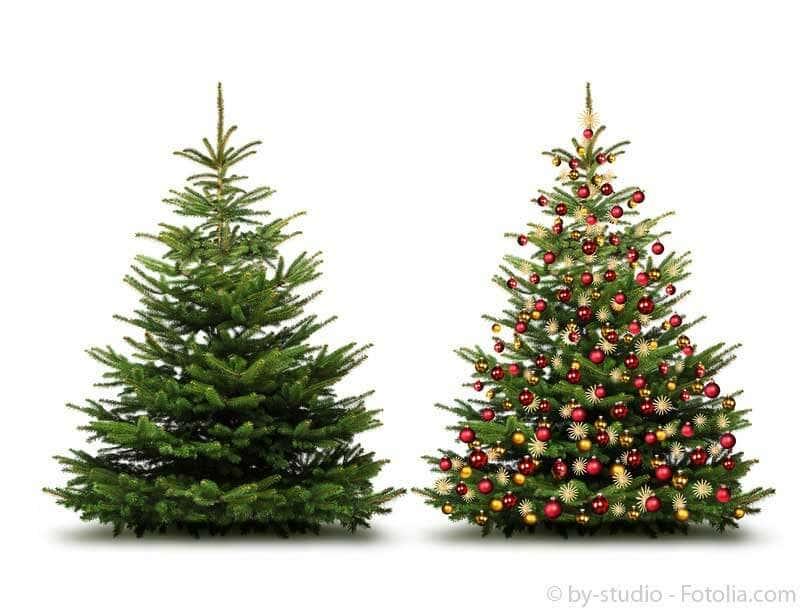 weihnachtsbaum wettbewerb 2014 f r kunden der gartenhaus. Black Bedroom Furniture Sets. Home Design Ideas