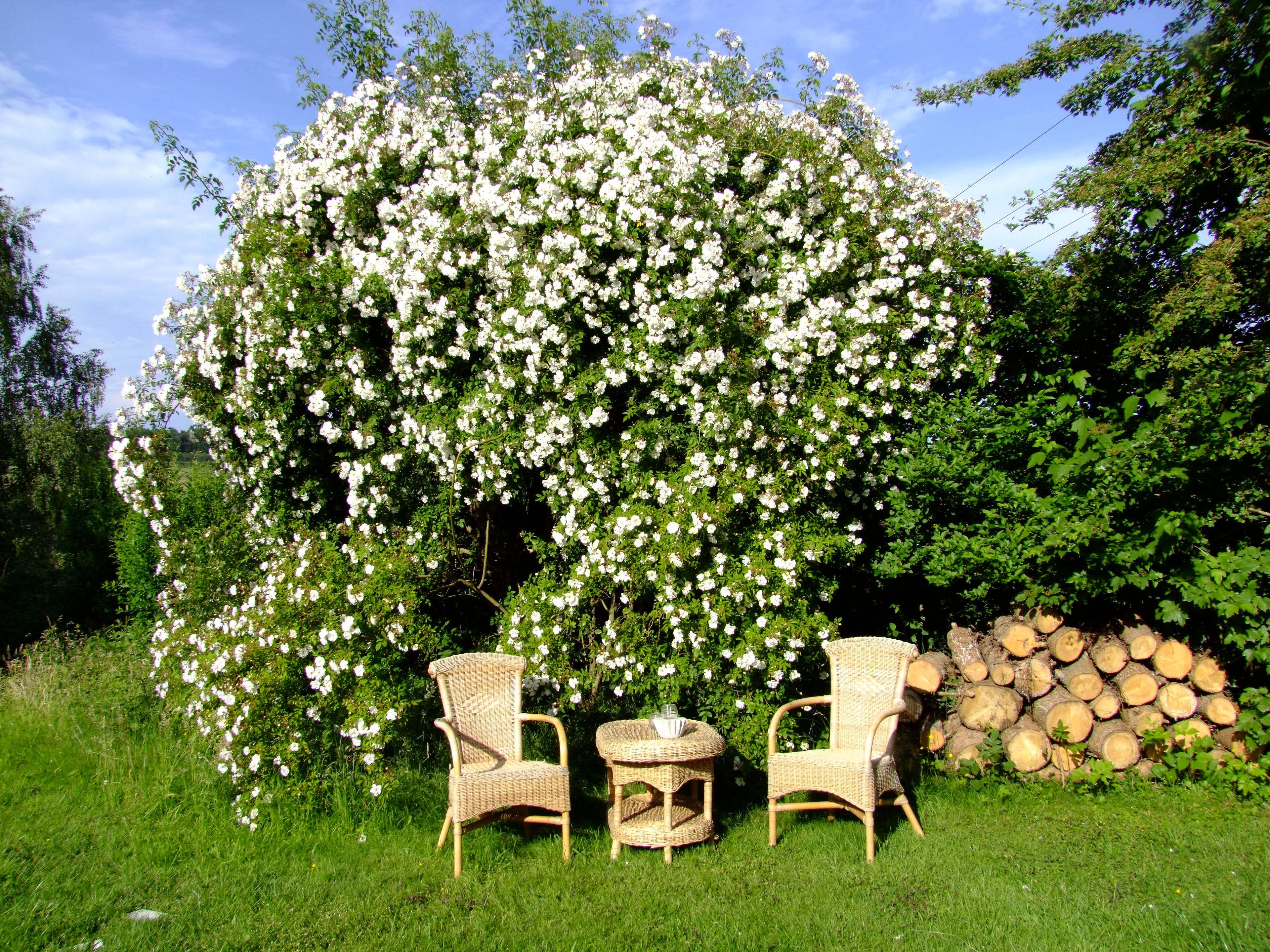 garten sitzecke gestalten: ideen für kleine & große gärten