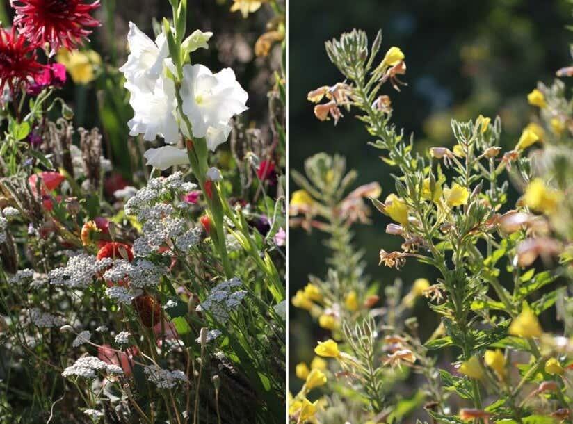 Gartenideen Für Wenig Geld Elkes Null Euro Beet