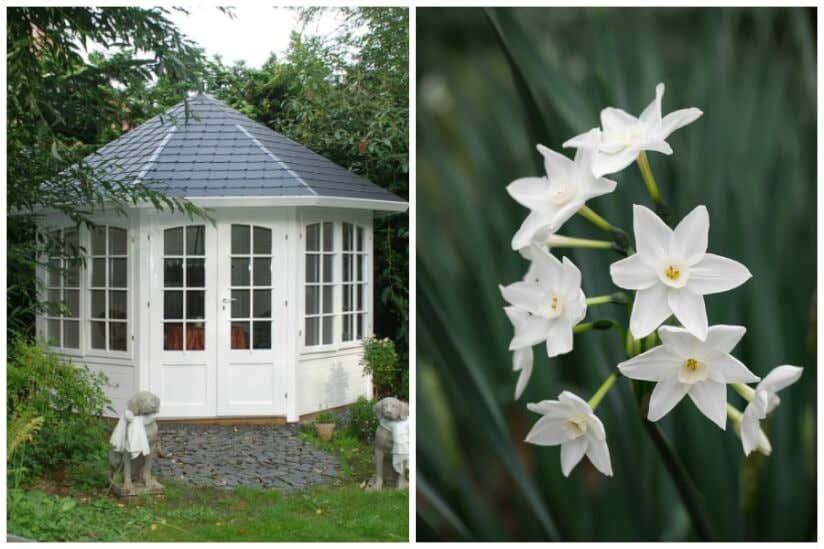 Geliebte Weiße Blumen im Garten – Inspiration zur Gartengestaltung @RW_05