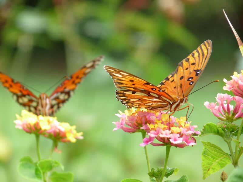 Garten Anlegen Auf Balkon: 10 Ideen Fürs Gärtnern Blumen Balkonausrichtung Welche